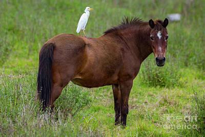 Photograph - Pale Rider by Daniel Knighton