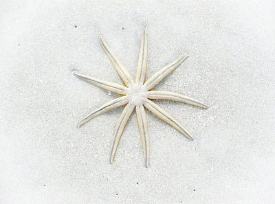 Photograph - Pale Star by Lynn Wohlers