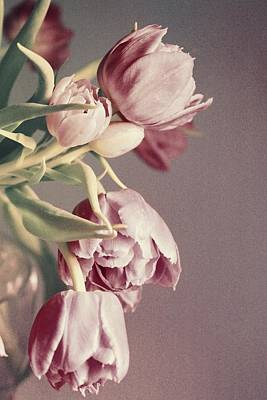 Double Layer Photograph - Pale Tulips by Cathie Tyler