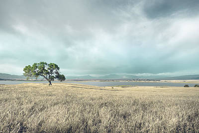 Lonely Tree Photograph - Palegold by Alexander Kunz