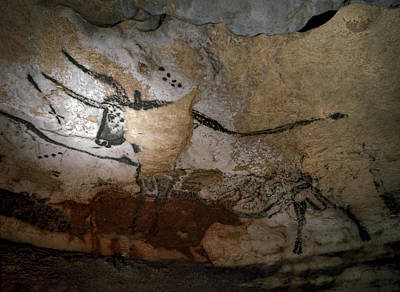 Photograph - Paleolithic Art Of Bulls On Calcite by Keenpress