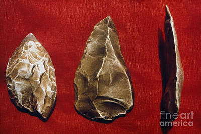 Photograph - Paleolithic Tools by Granger