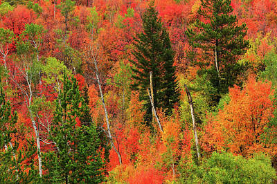 Photograph - Palisades Autumn Palette by Greg Norrell