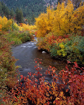 Photograph - Palisades Creek Canyon Autumn by Leland D Howard