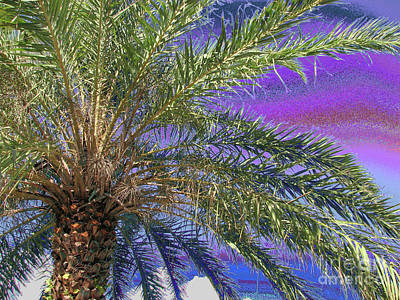 Photograph - Palm 1001 by Corinne Carroll