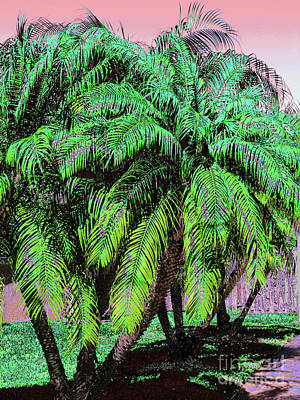 Photograph - Palm 1002 by Corinne Carroll