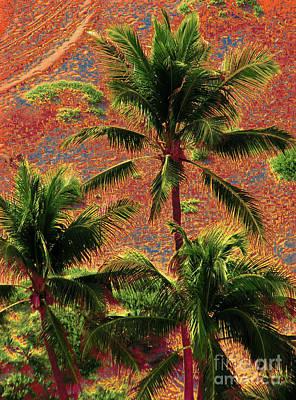 Photograph - Palm 1003 by Corinne Carroll