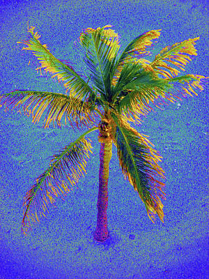 Photograph - Palm 1005 by Corinne Carroll