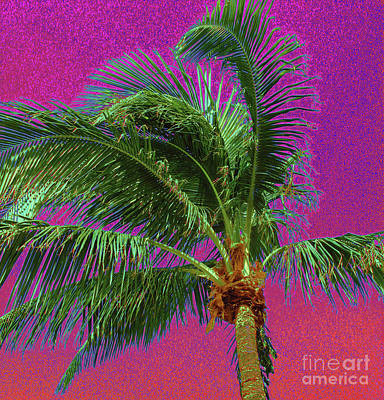 Photograph - Palm 1012 by Corinne Carroll