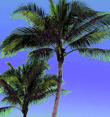Photograph - Palm 1015 by Corinne Carroll