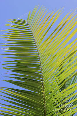 Photograph - Palm Abstract by The Art of Alice Terrill
