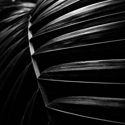 Photograph - Palm by Adam Graser
