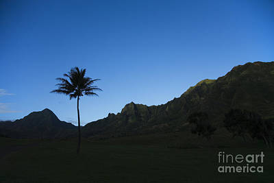 Palm And Blue Sky Art Print by Dana Edmunds - Printscapes