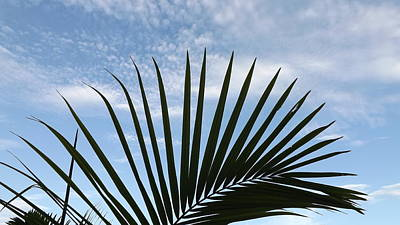 Photograph - Palm And Clouds  by Don Koester
