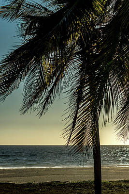 Photograph - Palm At Dusk by Tina Ernspiker