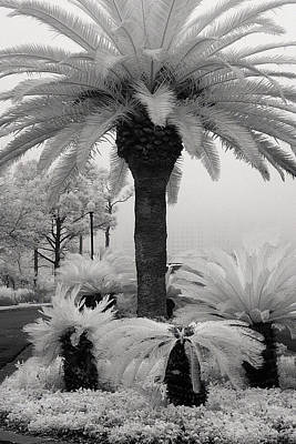 Palm At Gulf Shores Art Print by Fred Baird