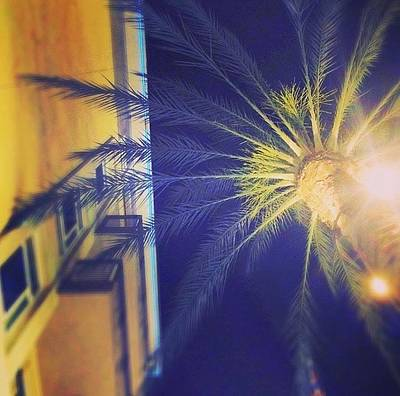 Photograph - Palm At Night by Sarah Vandenbusch