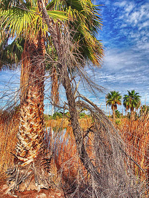 Photograph - Palm At Papago Park by C H Apperson
