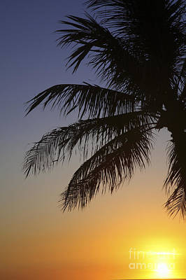 Palm At Sunset Art Print by Brandon Tabiolo - Printscapes
