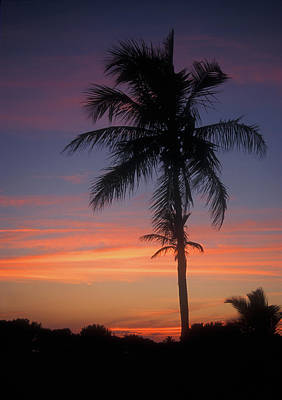 Photograph - Palm At Sunset by John Burk