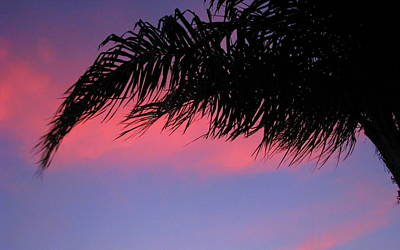 Photograph - Palm At Sunset by T Guy Spencer