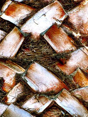 Photograph - Palm Bark by Debra     Vatalaro