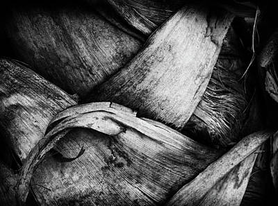 Photograph - Palm Bark by Michael Raiman