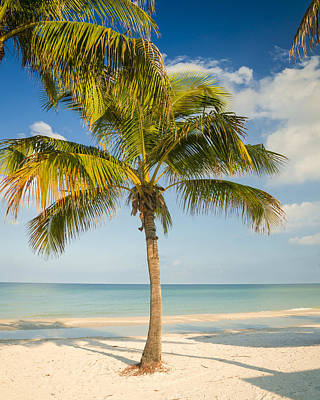 Photograph - Palm Beach by Sean Allen