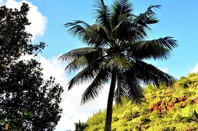 Photograph - Palm Beauty by Kristalin Davis