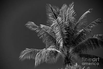 Photograph - Palm Beauty Monochrome Lahaina by Sharon Mau
