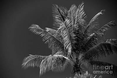 Palm Beauty Monochrome Lahaina Art Print