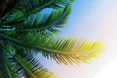 Photograph - Palm Branches by Jocelyn Friis