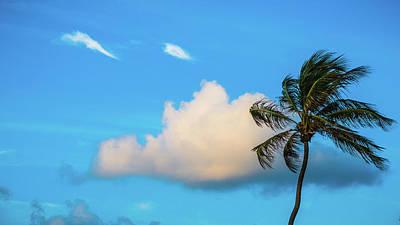 Photograph - Palm Cloud Delray Beach Florida by Lawrence S Richardson Jr