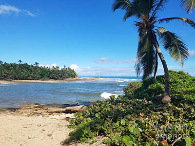 Photograph - Palm Cove by Kevin F Heuman