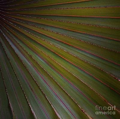 Photograph - Palm by Denise Railey