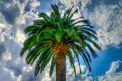 Photograph - Palm by Derek Dean
