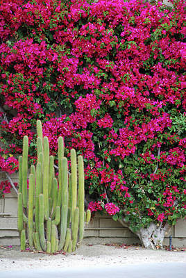 Palm Desert Blooms Art Print