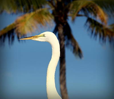 Palm Egret Art Print by Karen Wiles