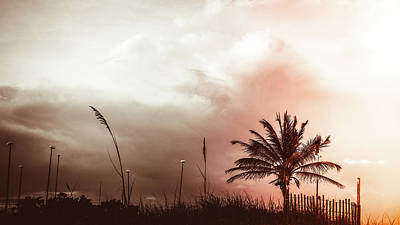 Photograph - Palm Fence Delray Beach Florida by Lawrence S Richardson Jr