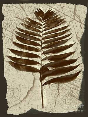 Mix Medium Digital Art - Palm Fossil Sanstone  by Delynn Addams