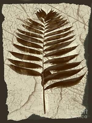 Palm Fossil Sanstone  Art Print by Delynn Addams