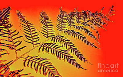 Photograph - Palm Frond In The Summer Heat by Kaye Menner
