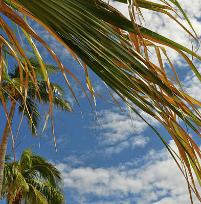 Photograph - Palm Frond by Jamart Photography