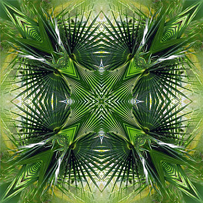 Photograph - Palm Frond Kaleidoscope by Francesa Miller
