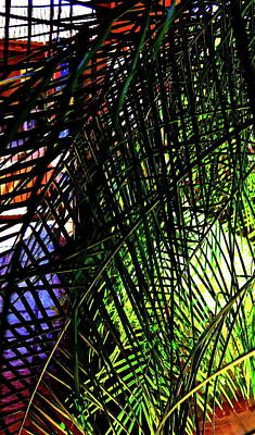 Palm Frond Lattice Art Print by Bonnie See