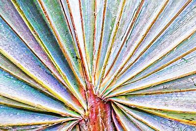 Photograph - Palm Frond Lines by Alice Gipson