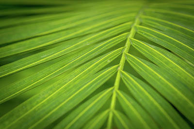 Photograph - Palm Frond by Paul Freidlund