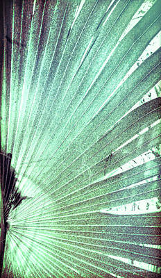 Radiates Photograph - Palm Frond-rh by Marvin Spates