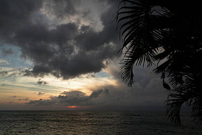 Photograph - Palm Frond Sunset by John Daly
