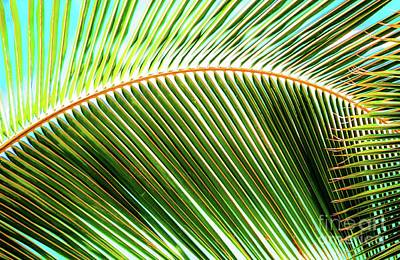 Art Print featuring the photograph Palm Frond Sway by D Davila
